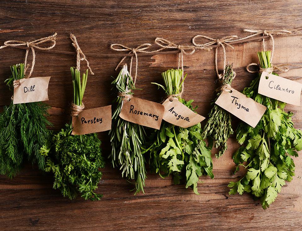 Αρωματικά φυτά cover